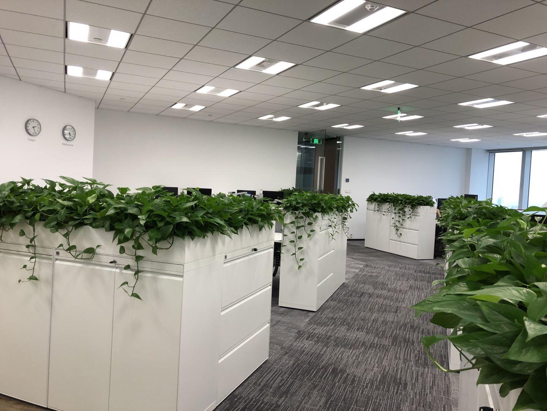 先锋-上海办公室植物租摆