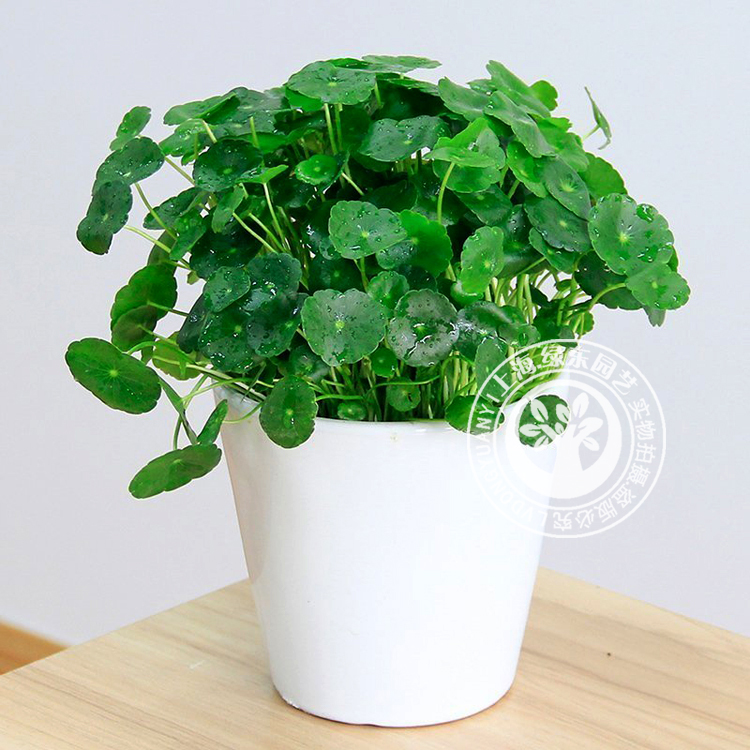 几种常见上海绿植养护方法