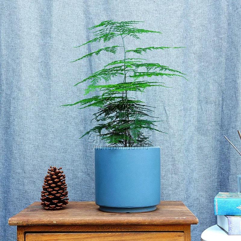 上海办公室绿植租赁说说办公室适合养什么植物