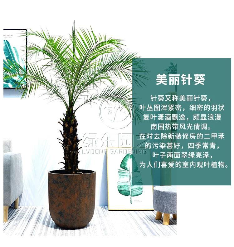 上海办公室绿化养护租摆有什么好处?