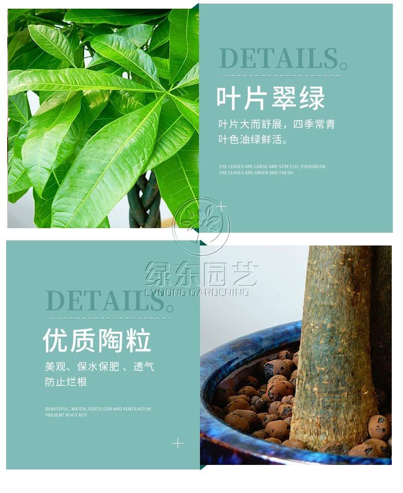 上海办公室绿化养护说说绿化养护小妙招
