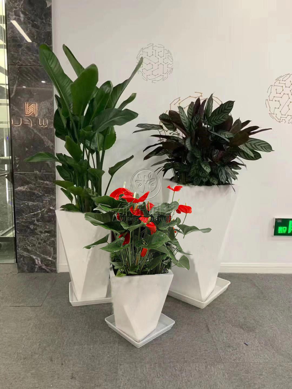 上海办公室绿化养护有哪些特点