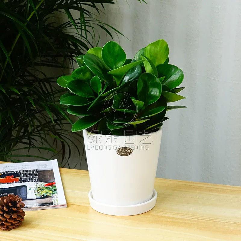 夏天可以让人清凉一夏的植物,该如何养护?