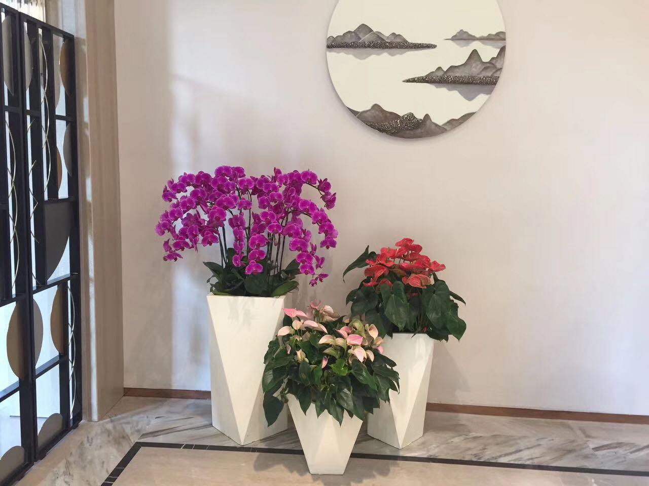 药明康德-办公室植物租赁