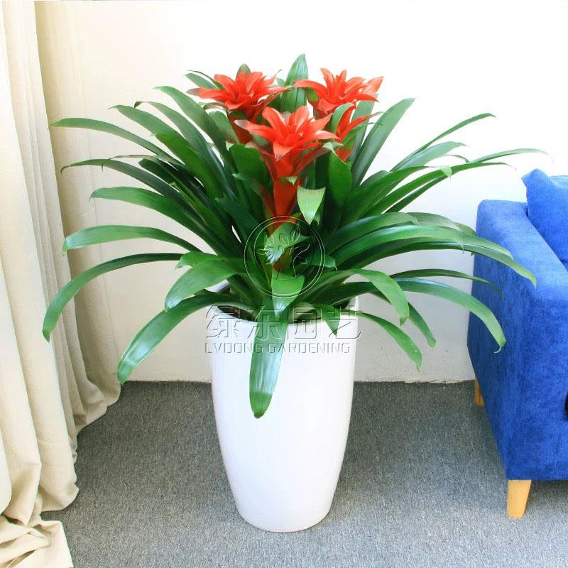 上海办公室植物租赁方案